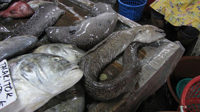 moray eel food