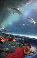 espectaculo para niños del oceanografico.Dormir entre tiburones