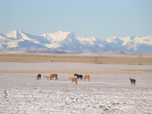 Horses north of Nanton