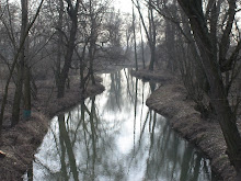 River & trees