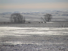 Snowy Farmland