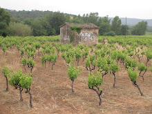 Vineyard's new growth