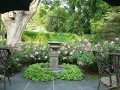 Roses for Memorial Day