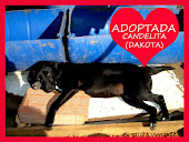 Candela (Dakota) ADOPTADA!