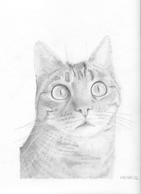 Notre chat Titeuf