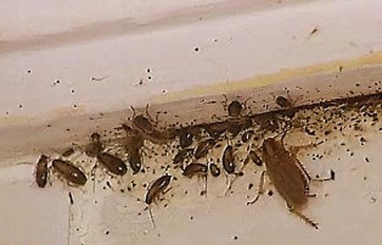 El blog de biottec las cucarachas - Plaga hormigas en casa ...