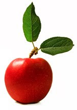 Apple with Leaf WB md1