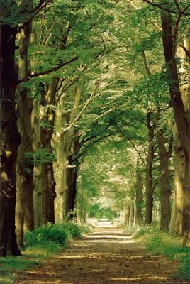 hein van den heuvel forest path