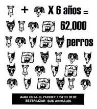 Seguro para Mascotas de la Delegacion Miguel Hidalgo (D.F.)