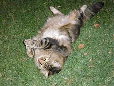 grass rolling