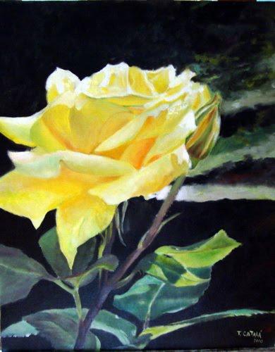 ROSA AMARILLA, del jardín de Elena