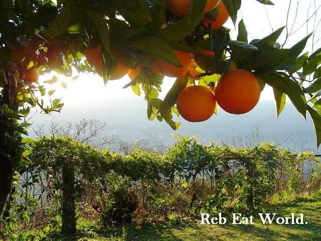 Reb Eat World