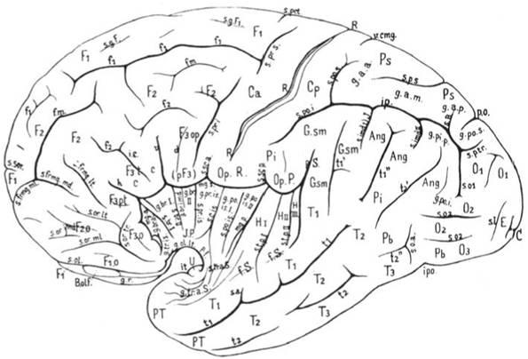funciones del cerebro humano. funciones del cerebro humano. cerebro humano consciente; cerebro humano consciente. madmax_2069. Aug 27, 03:44 PM. Love the second one.