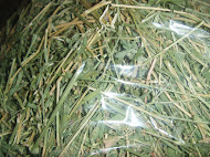 alfalfa hay straw