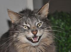 "Super Cat - ""Gizmo"""