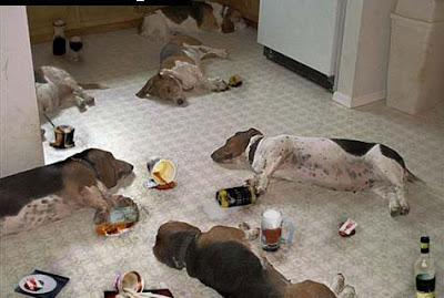 Dog Party Last Night