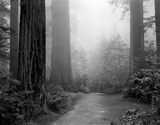 Black and white photography - Brandon Allen - Redwood National Park