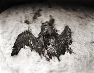 Departed Avian - Antelope Island - Great Salt Lake