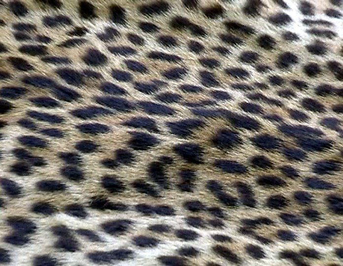 Leopard%20skin%203a.jpg