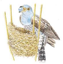 El nido del Cuco