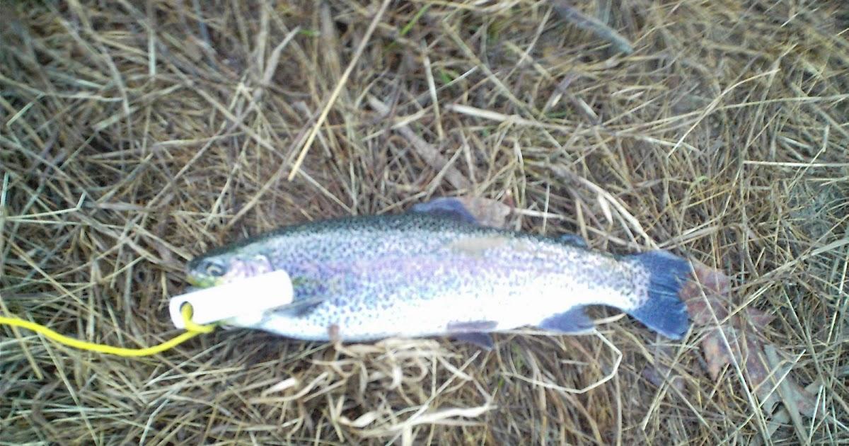 Fish missouri busch wildlife stocker trout success for Busch wildlife fishing