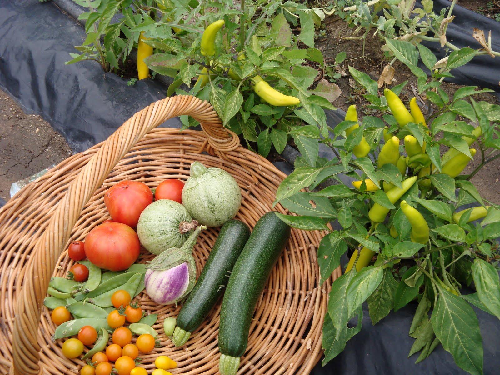 Kitchen Gardens Kitchen Garden Ideas Kerala