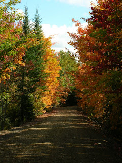 fall foliage walks in maine