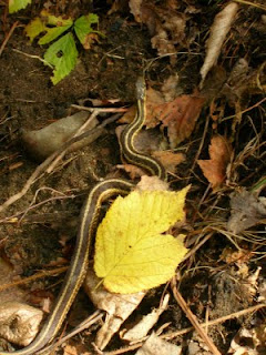 snake on a trail