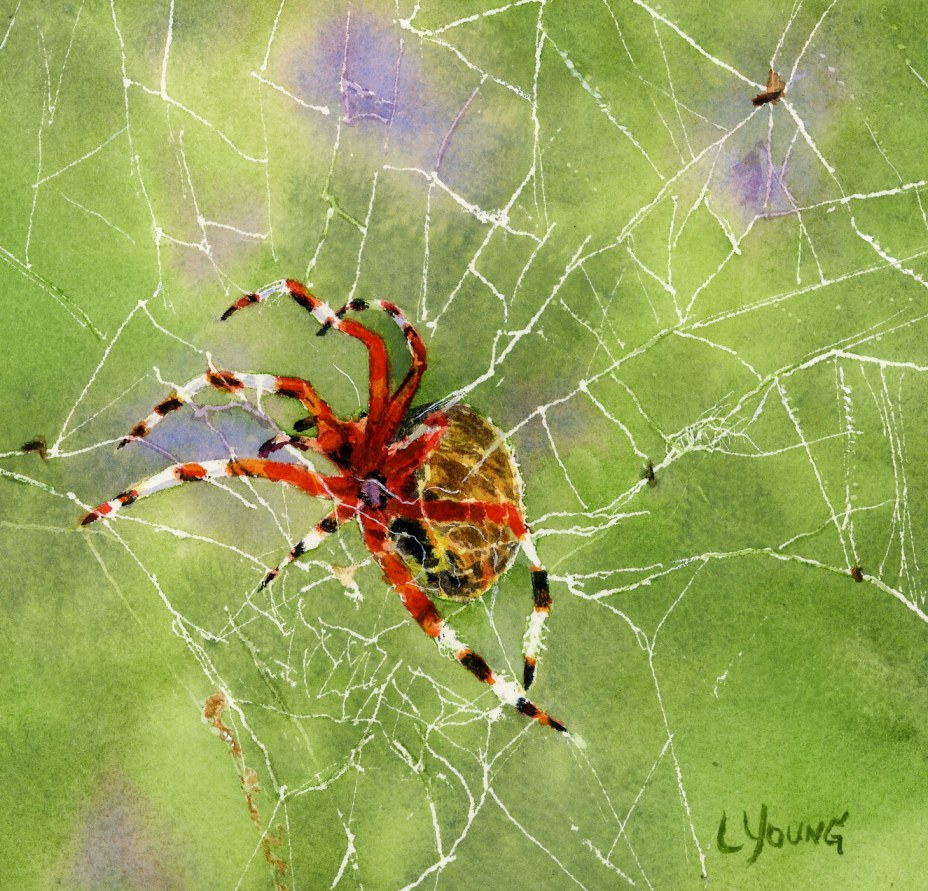 Daily Painters Of Pennsylvania Marbled Orb Weaver