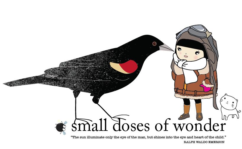 SMALL DOSES OF WONDER