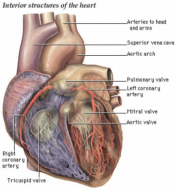 heart attack diagram. since my own heart attack,