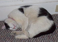 Martis cat nap