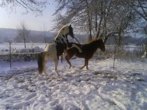 Billy Kris, cheval d'indien Polonais en Normandie - Page 3 DSC00629