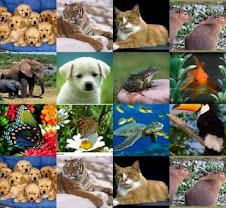 PROTEÇÃO E DEFESA AOS ANIMAIS