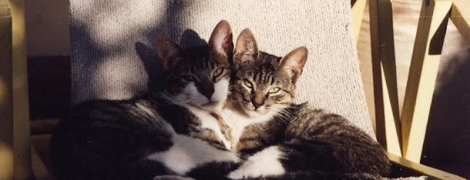 Tomás y Chini