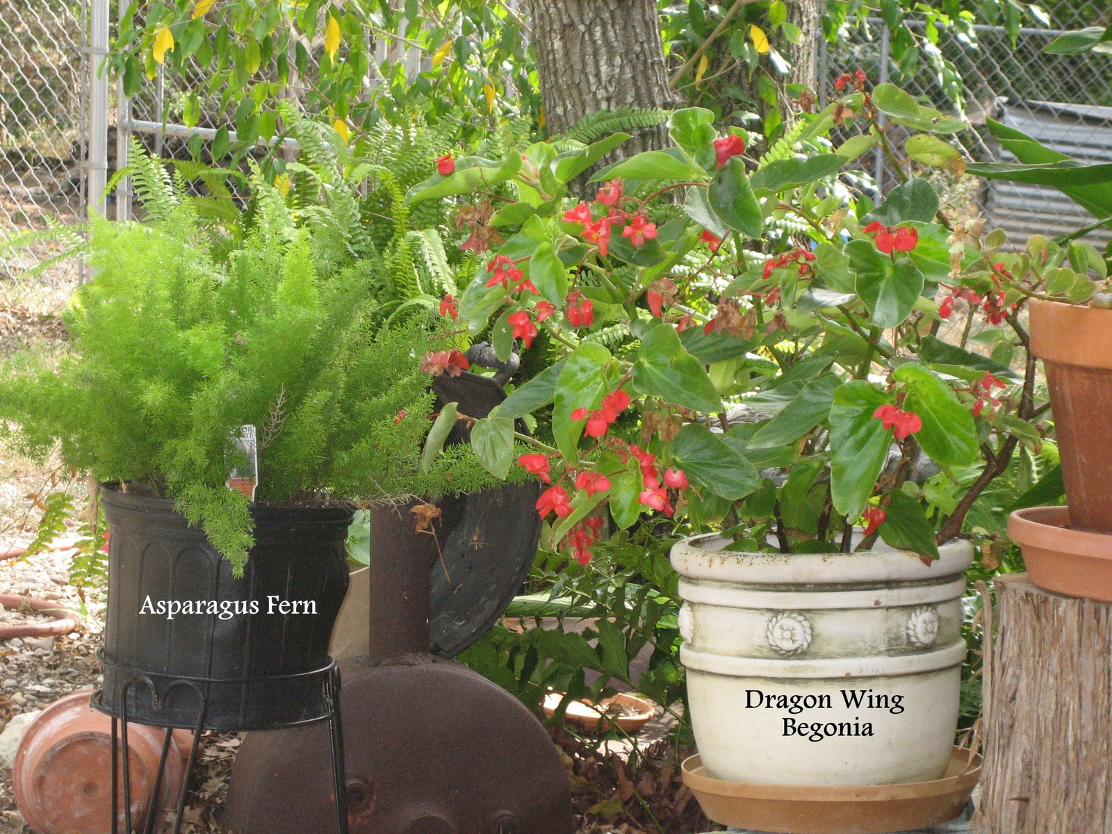 A Southwest Gardener 39 S Journal Container Gardening Part 2 Soil