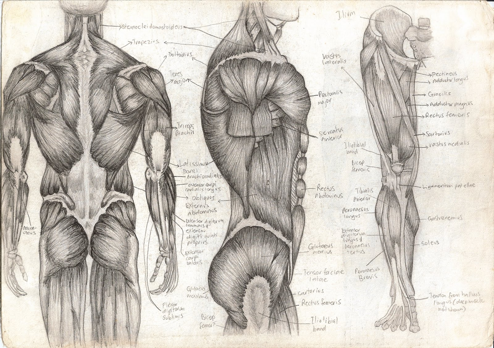 http://4.bp.blogspot.com/_iEKwH1xBoGE/TGNiSW1B2qI/AAAAAAAAAD0/85HJBnckrp0/s1600/Anatomy_4.jpg