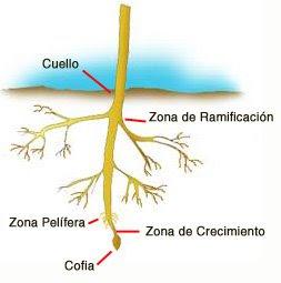 Ciencias naturales tipos de tallos hojas y raices for Significado de un arbol sin hojas