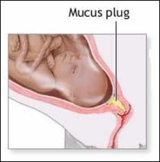 Mucus plug loss and sex