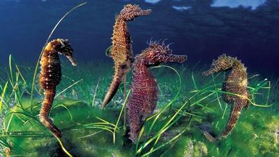 http://4.bp.blogspot.com/_iFjeFxtVbBE/TLlmR6f998I/AAAAAAAAAGY/0RFJPxx0Y7s/s1600/seahorse1.jpg