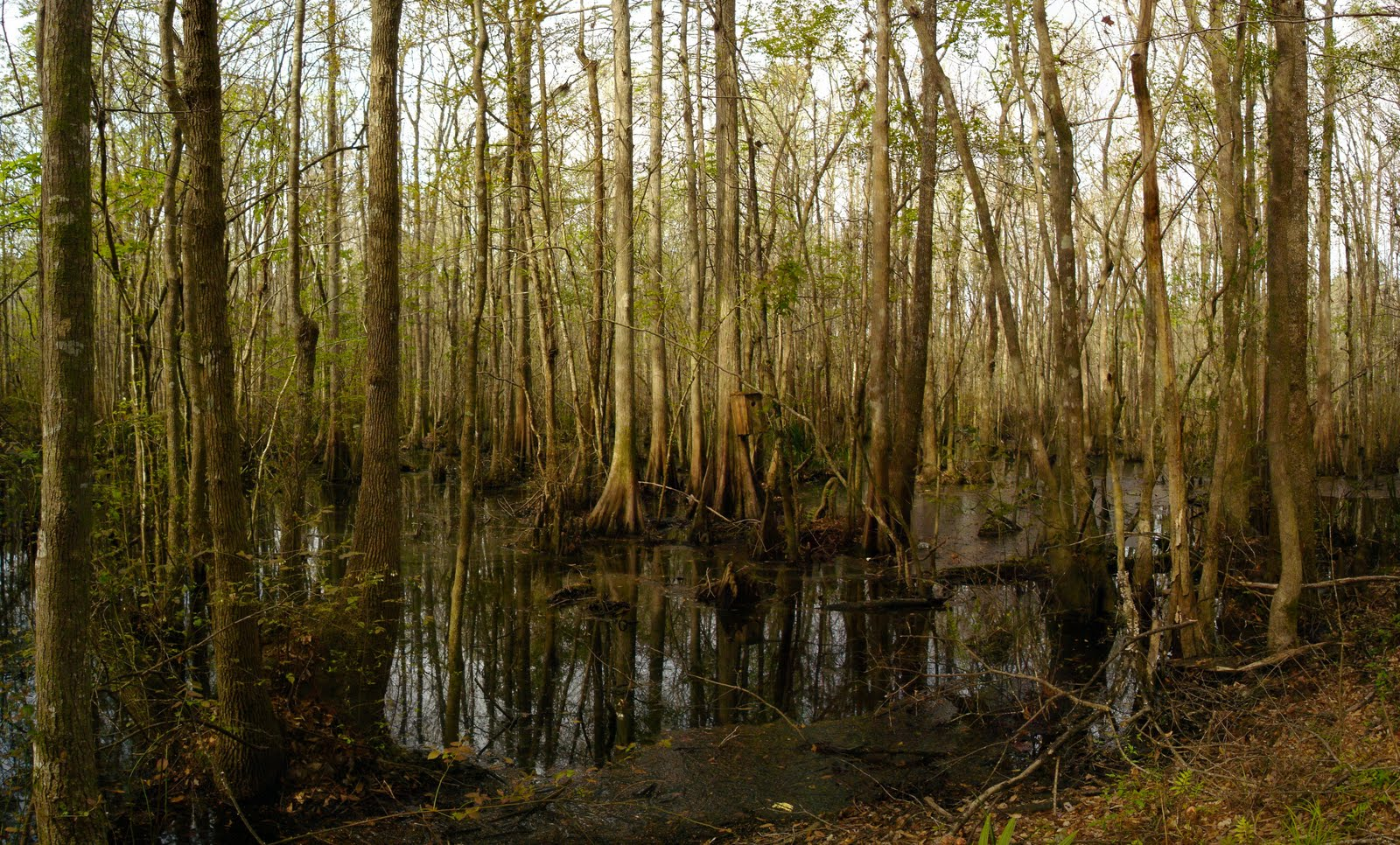 Heart of the Swamp