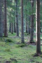 Mitt i trollskogen