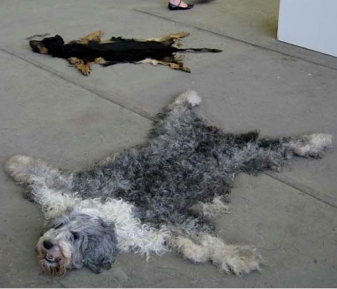 Stop al maltrato animal alfombras de perros y gatos for Alfombras usadas