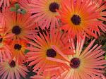 Flores de estación, ramos y centros de mesa
