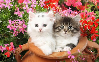 Awesome Cat Pair in the Pot