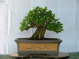 ficus