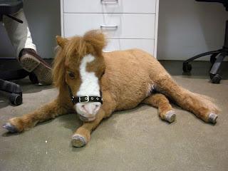 http://4.bp.blogspot.com/_iPN9HCwFegw/SoNT8ZMNbXI/AAAAAAAAF3s/39_8rCCavOw/s320/smallest+horse.jpg