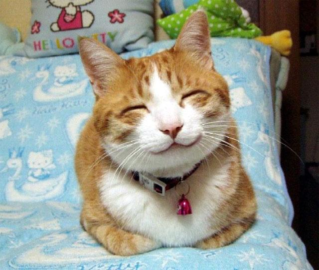 ^*eaewdkwdksjdWWDSSDKOSAS*^ Gato-feliz