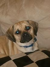 Our Puppy Gunner