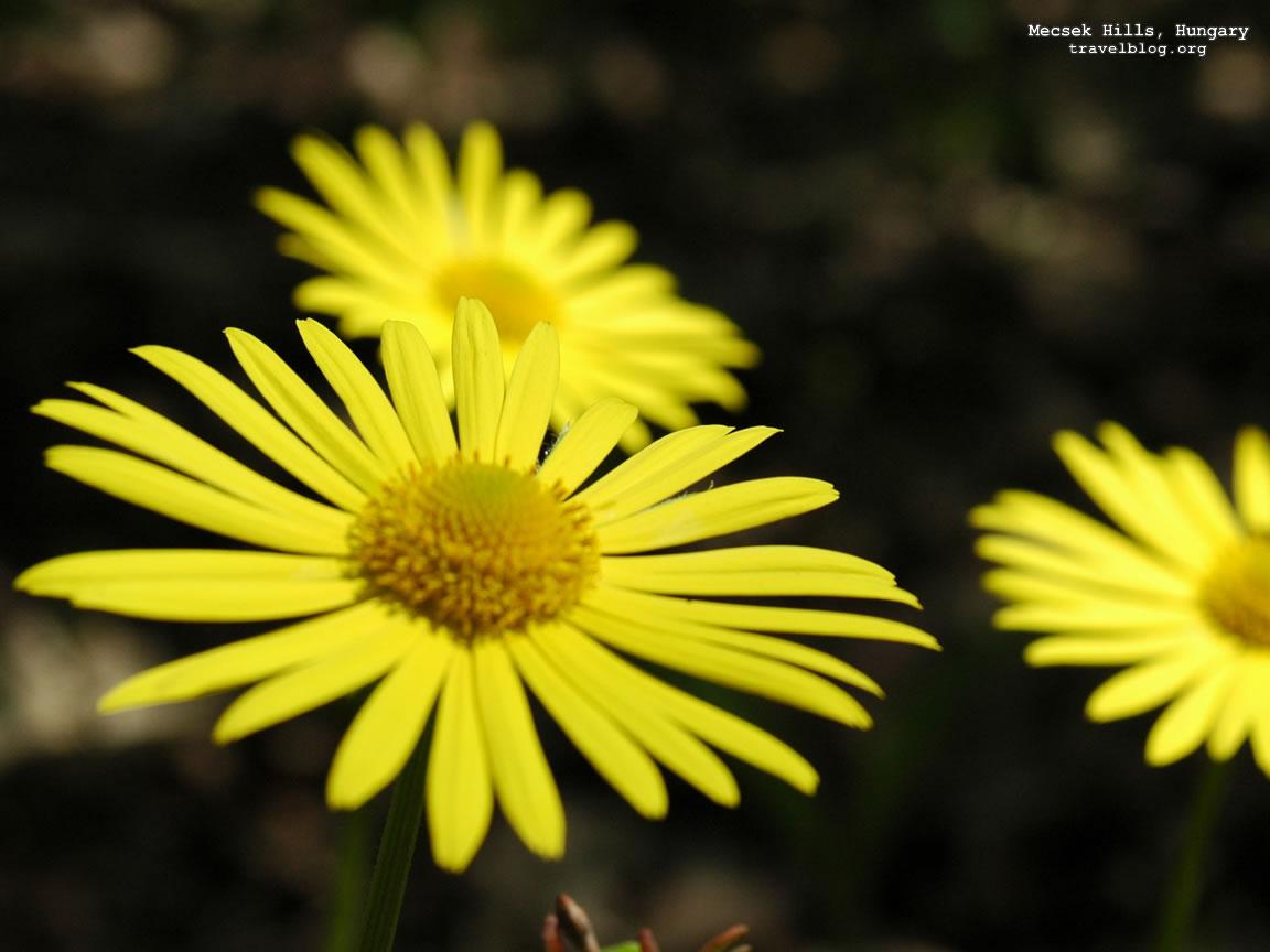 http://4.bp.blogspot.com/_iS0jVAdgaRY/SwT6UTC0bqI/AAAAAAAAAAU/UaoH6xngBkI/s1600/poze+flori.jpg